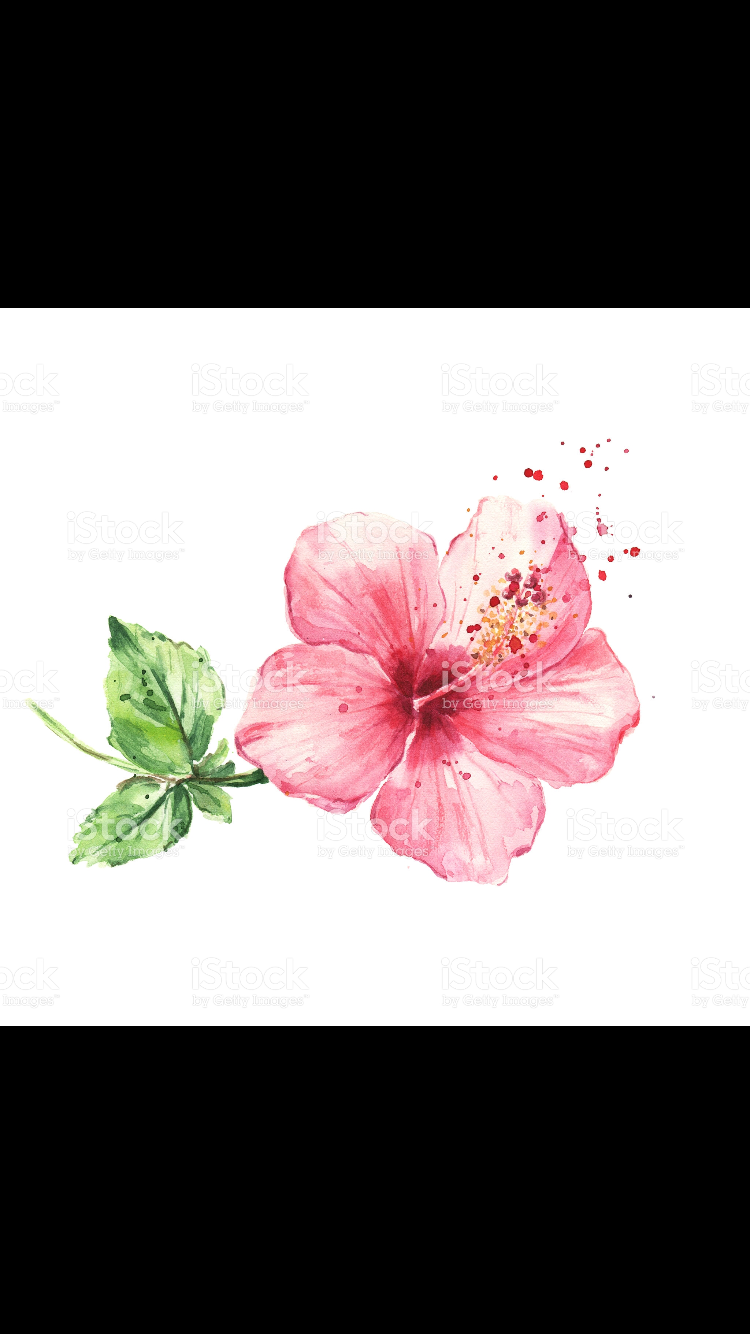 Pin By Marie Appert On Hibiscus Flower Watercolor Flowers Paintings Hibiscus Flower Tattoos Watercolor Flowers