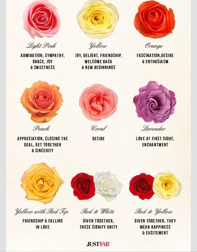The Meaning Of Rose Colors Rose Color Meanings Different Color Roses Rose Meaning