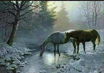 Horse Stories, Poems and Quotes