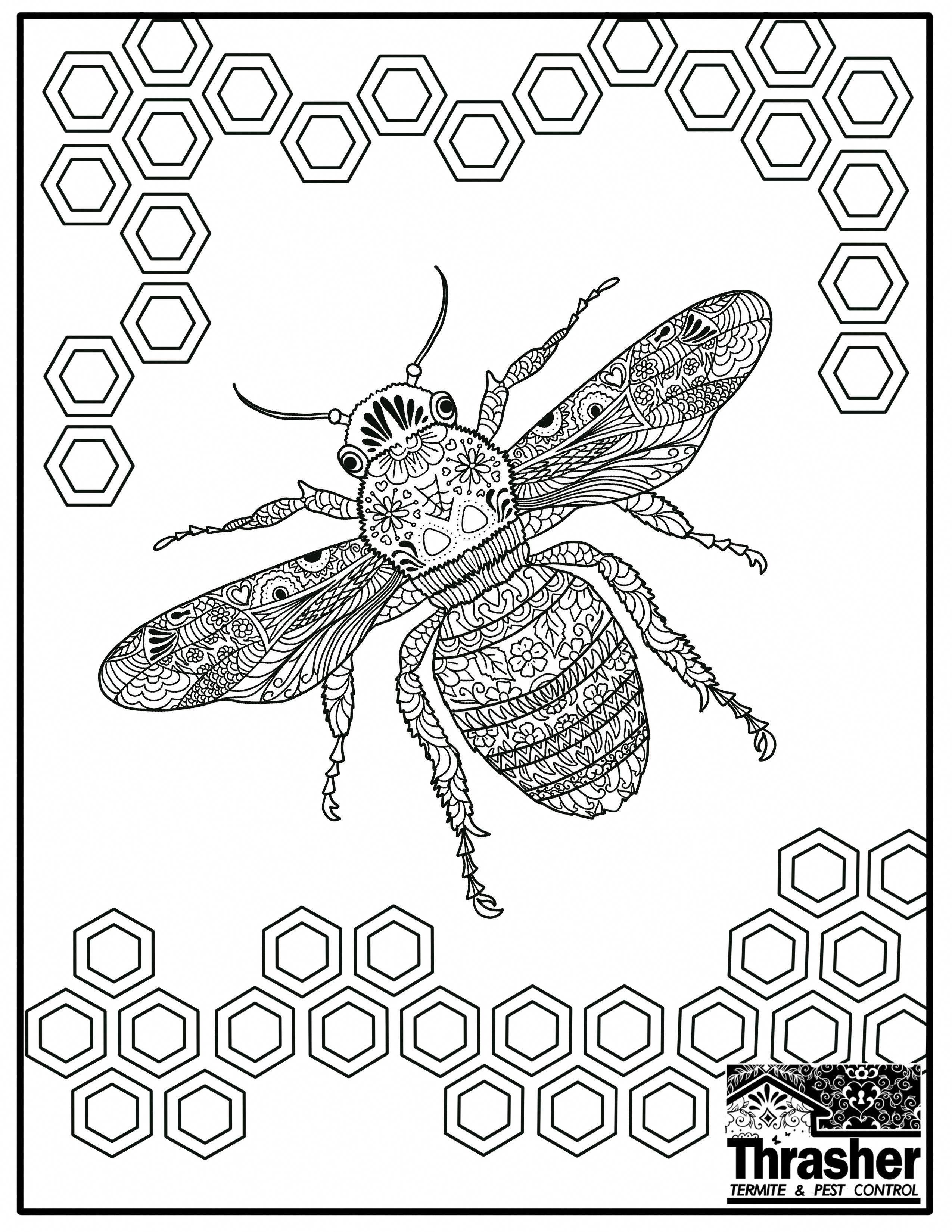 Bee Coloring Page Thrasher Termite Pest Control