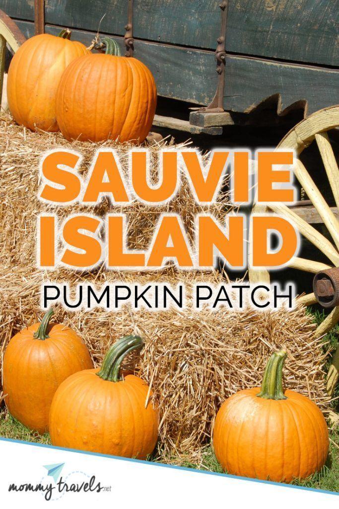 Sauvie Island Pumpkin Patch Pumpkin, Pumpkin patch, Island