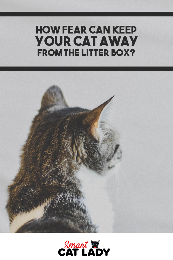 How Fear Can Keep Your Cat Away From The Litter Box