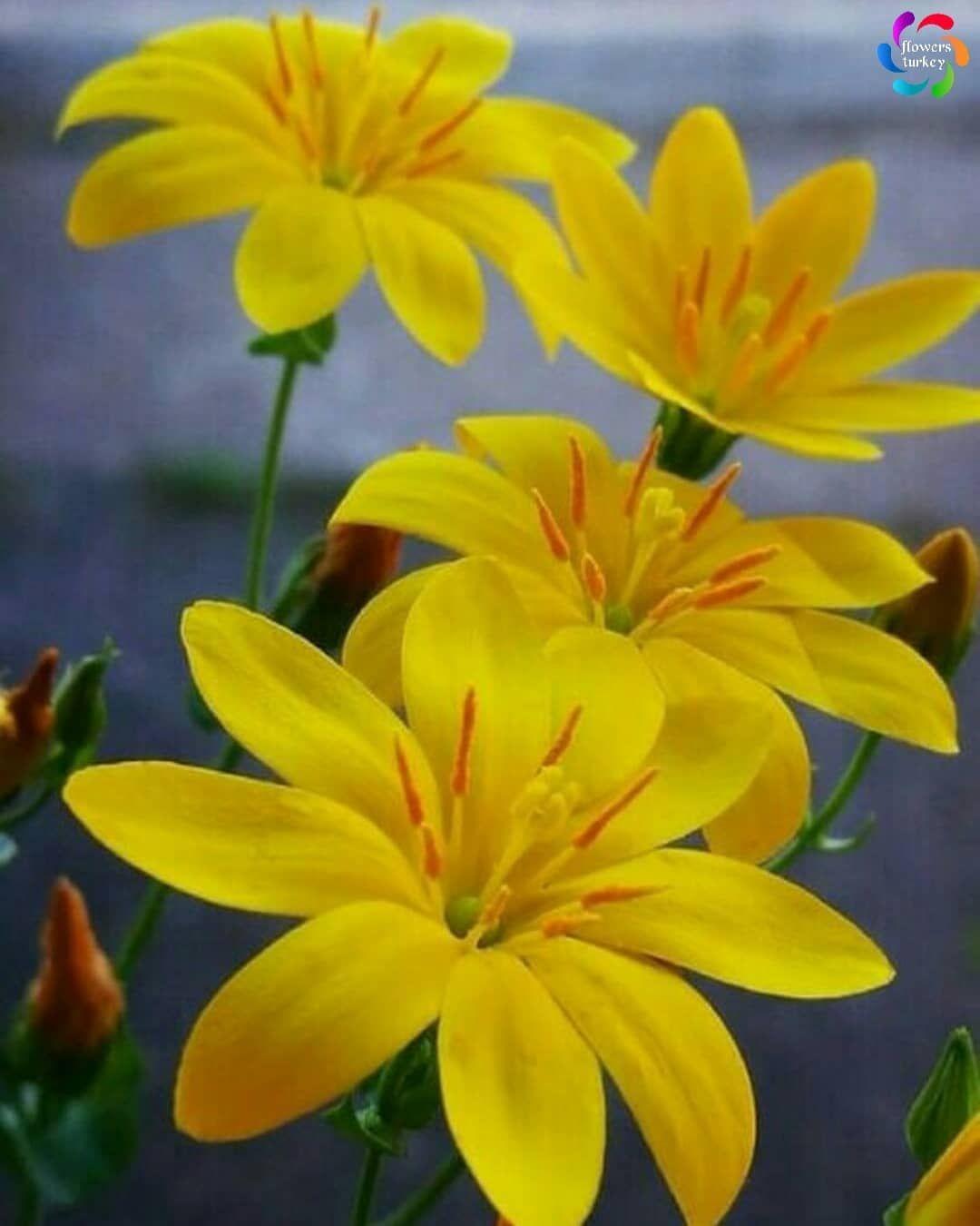 TEBRİKLER Congratulations!!! Fotoğraf / Photo @elmsklg Seçim / Selected @faikderici Lütfen bizi takip edin @flowers_turkey Lütfen tagımızı kullanın #flowers_turkey Kardeş sayfalarımız @ig_alaturka @flower_igers #flower_igers #ig_alaturka . #show_us_nature #favv_flowers #9vaga9 #flowers_nirvana #nature_brilliance #mta_flowers #_flowersworld_ #flowerporn #raw_flowers_ #bns_flowers #captures_flowers #ip_blossoms #kahvelianlar #pocket_macro #flowerlover #loves_garden #ptk_