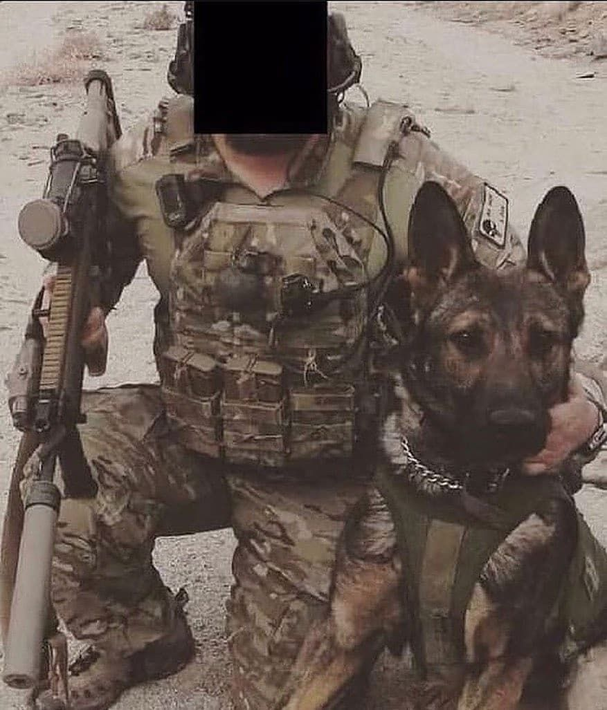 Top 10 Dogs Military dogs, Dog wound, Military working dogs