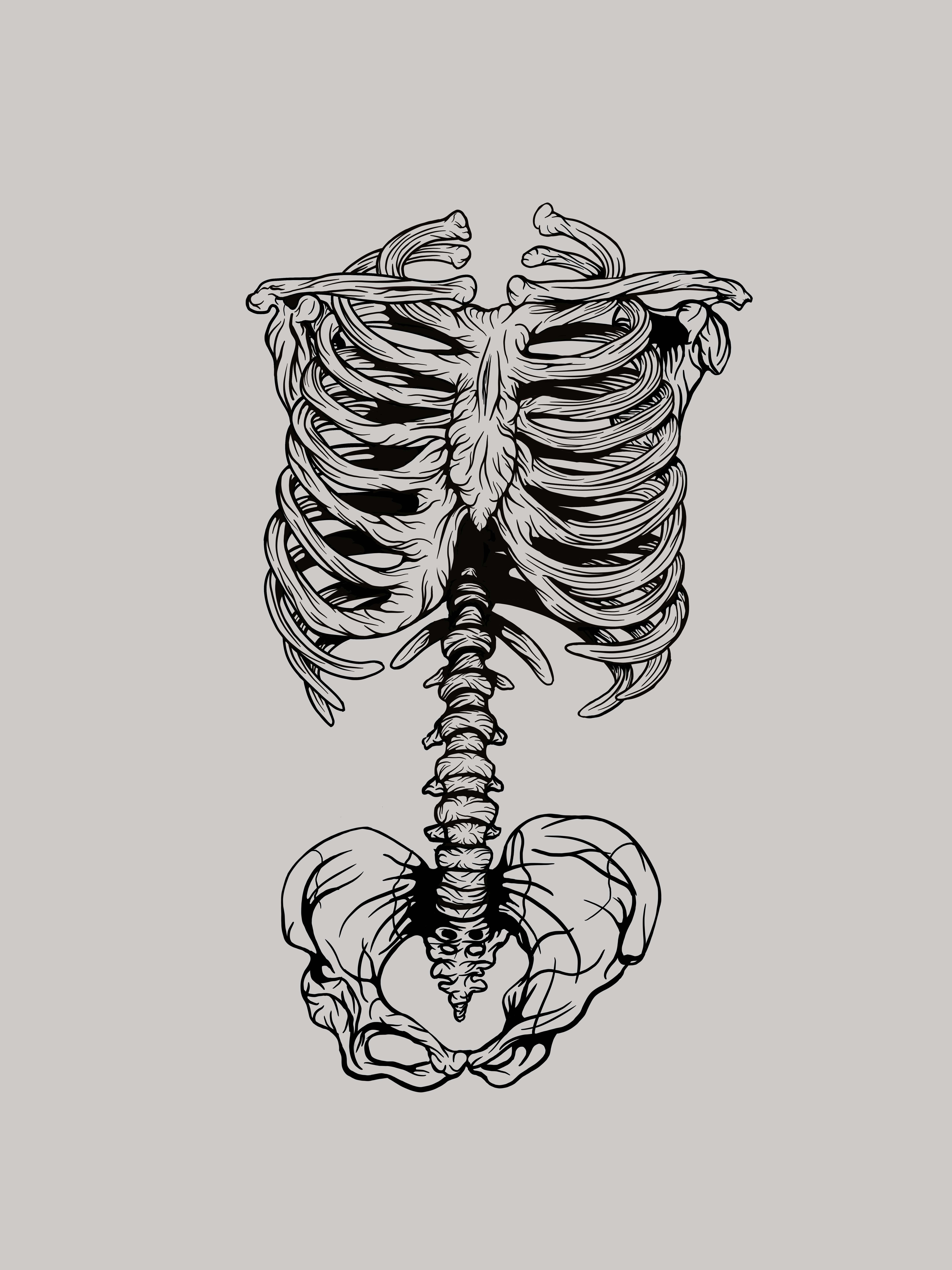 Rib Cage Drawing Photos and Premium High Res... - Getty Images