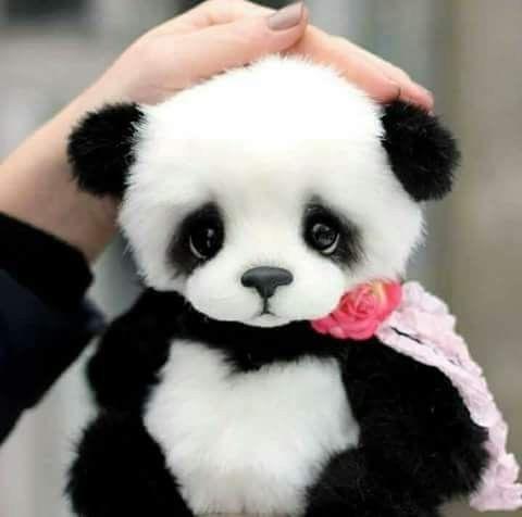 Pin By Yahya Hussein On ا Cute Panda Cute Animals Panda Bear