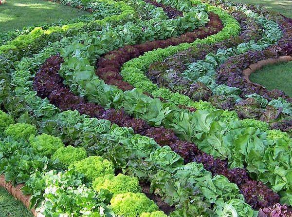 как сделать красиво грядки в огороде фото