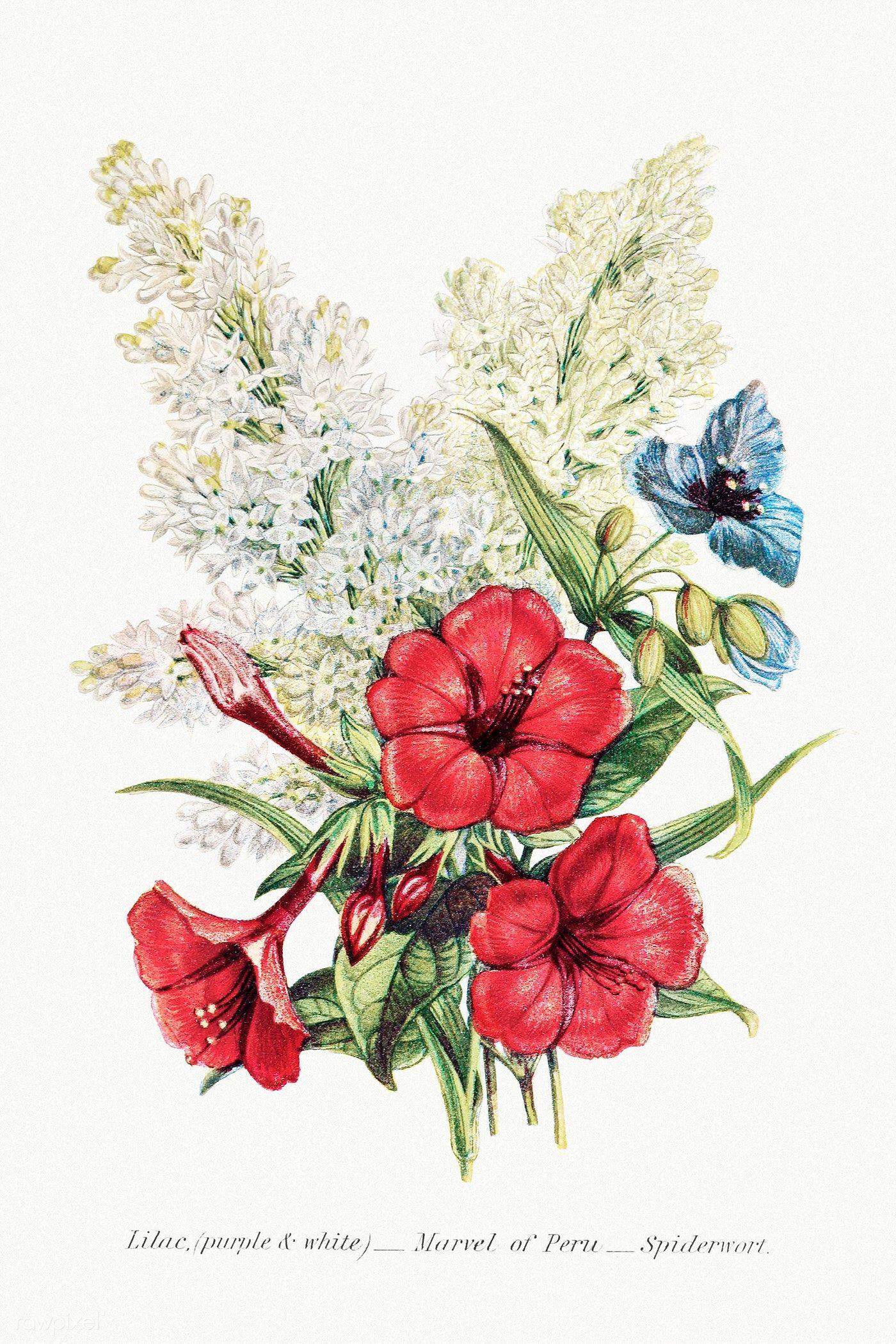 Download Premium Illustration Of Vintage Flower Bouquet Mockup 2097656 In 2020 Summer Flower Bouquet Flowers Bouquet Flower Bouquet Drawing