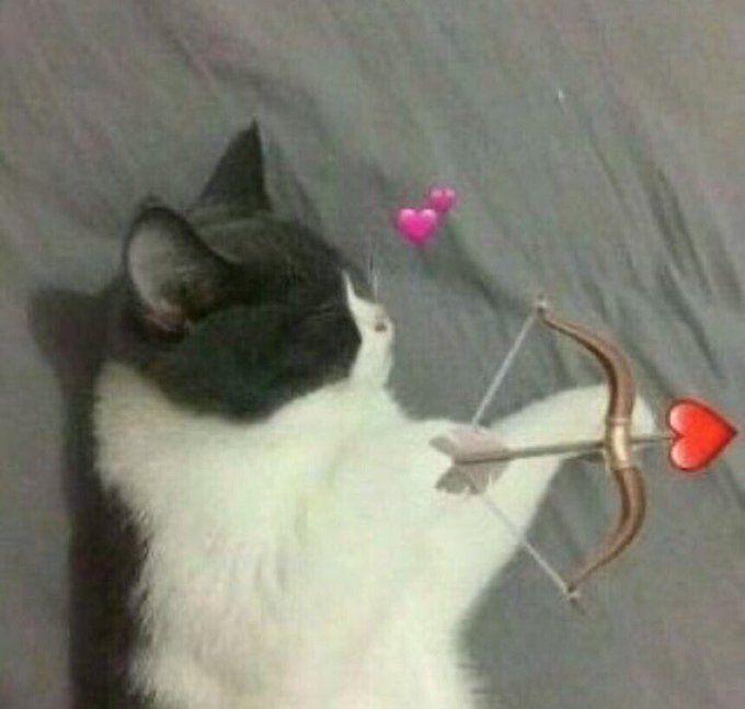 Nedvred In 2020 Cute Love Memes Cute Cat Memes Cute Animal Memes