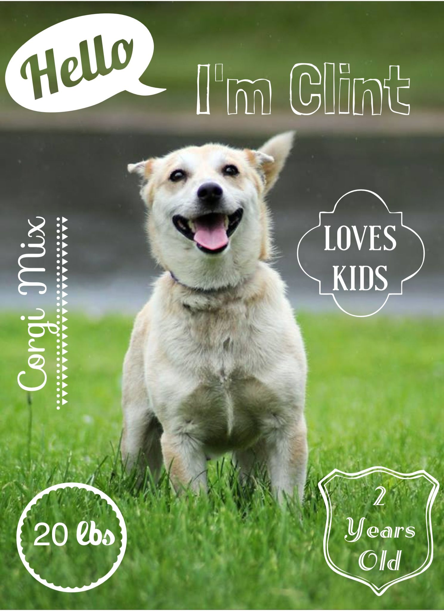 Shelter Dog Shelter Dog Photography Animal Shelter Fundraiser Shelter Dog Pictures