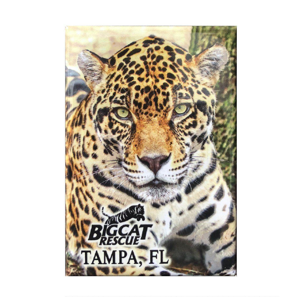 Laminated Photo of Manny Jaguar Big cat rescue