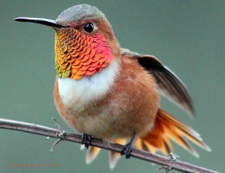 Nature's Best Photo by Lasanthica Fernando Benedict ...