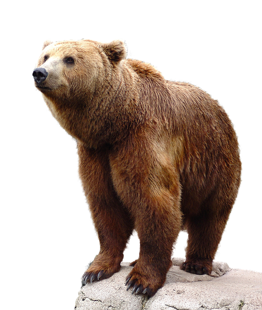 Free Image On Pixabay Wild Brown Bear Nature Animal Bear Stuffed Animal Bear Pictures Grizzly Bear