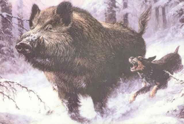 Sanglier dessin hledat googlem wild boar drawing - Dessin de chasse ...