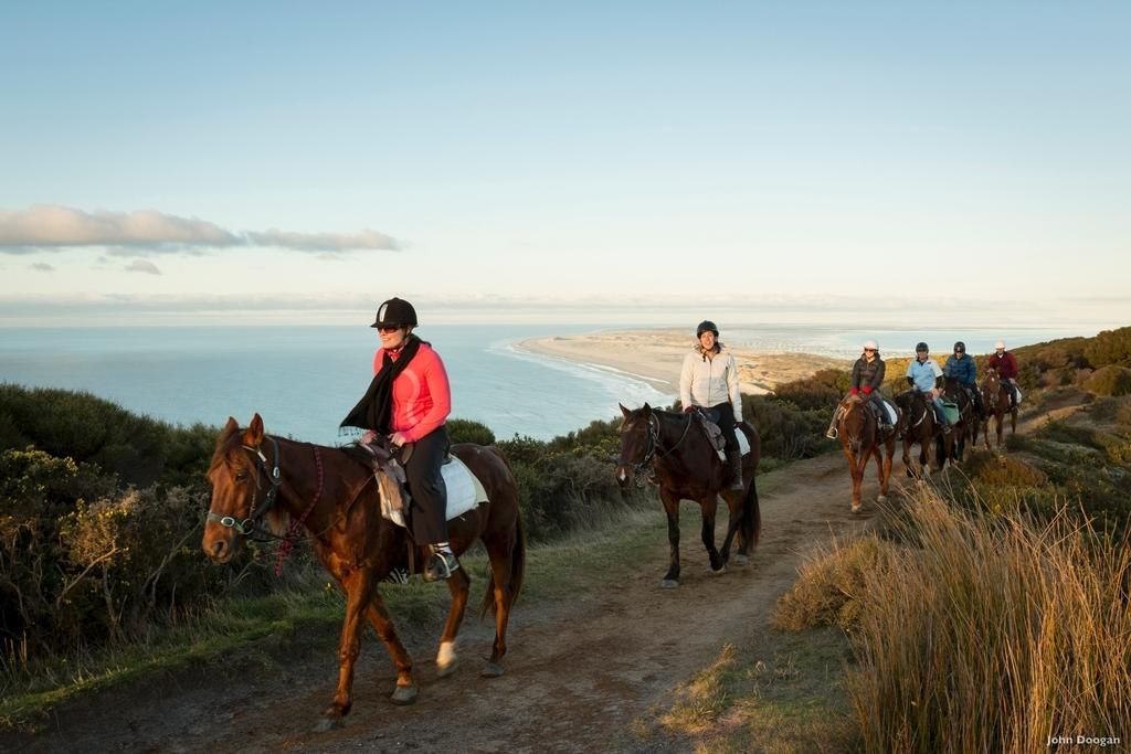 Take a horse trek in Nelson for spectacular coastal views