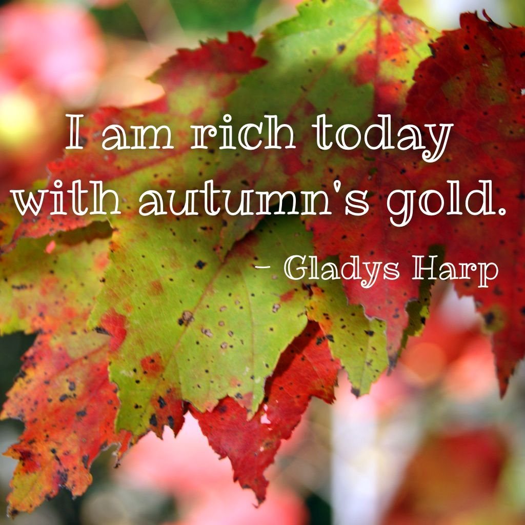 I Am Rich Today With Autumns Gold Gladys Harp Nature Fall