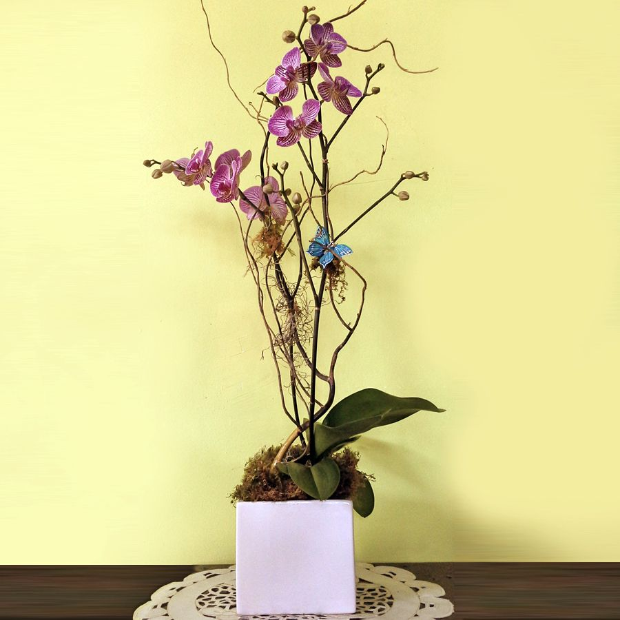 Just Because Phalaenopsis Orchid Arrangement Orchid Arrangements Phalaenopsis Orchid Orchids