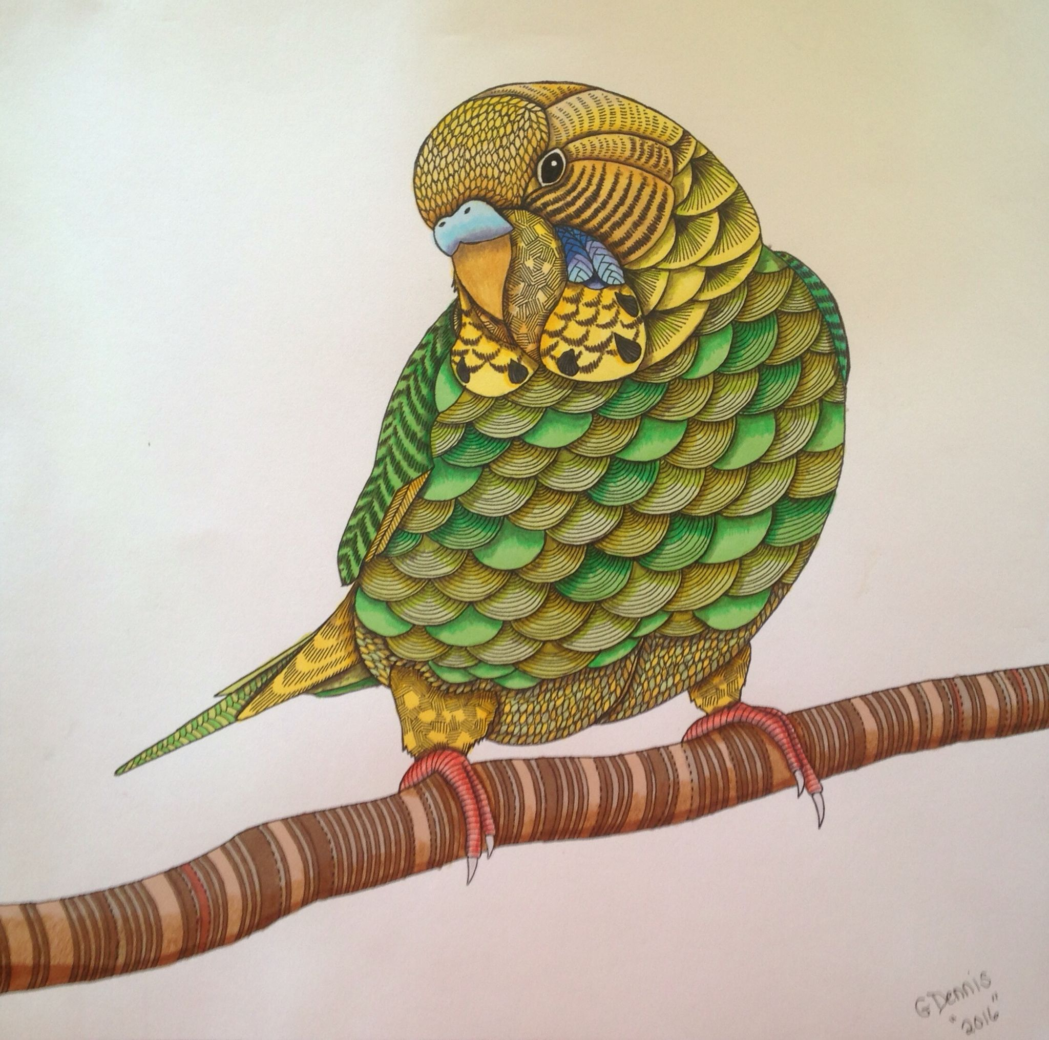 G Dennis Colored Budgie From Coloring Book Animal Kingdom By Millie Marotta Millie Marotta Animal Kingdom Animal Coloring Books Millie Marotta