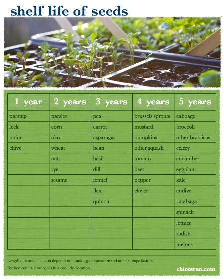 Shelf Life Of Seeds Chiot S Run Seeds Germination Garden