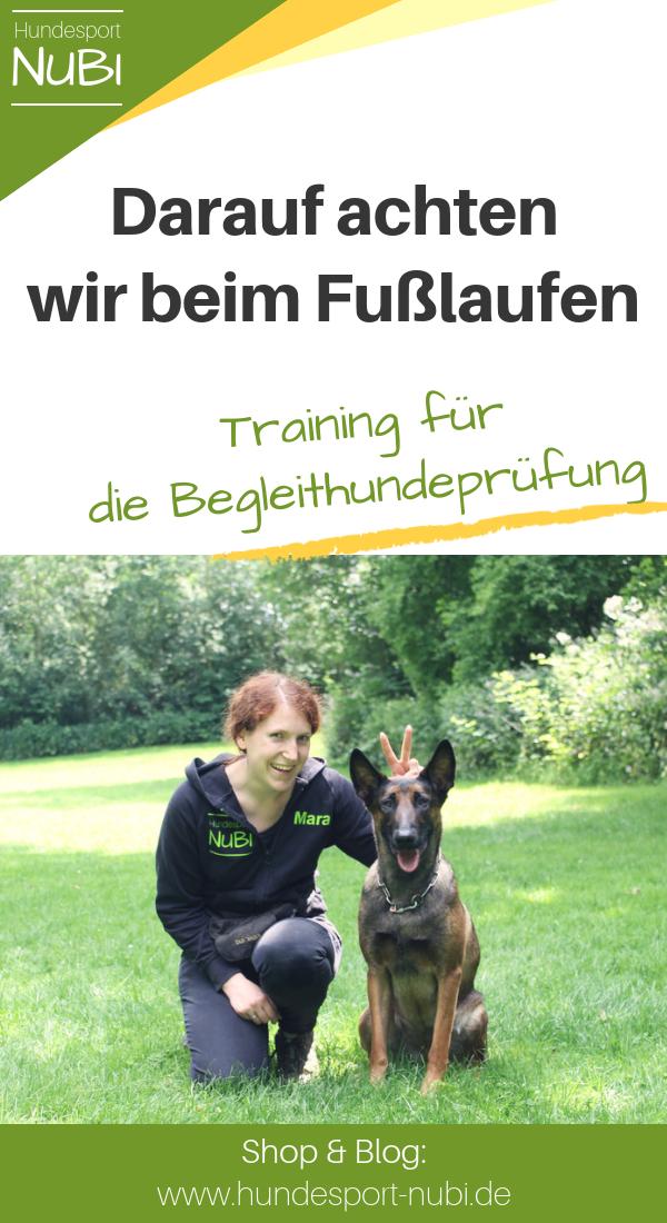 Vom Welpen Zum Begleithund Teil Acht Hunde Hundetraining Und