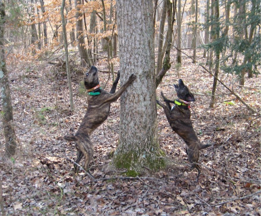 Tennessee Squirrel Hunting Squirrel Hunting Squirrel Hunting