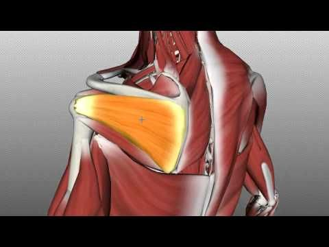 Active Release Technique- Subscapularis Muscle - YouTube. | Massage ...