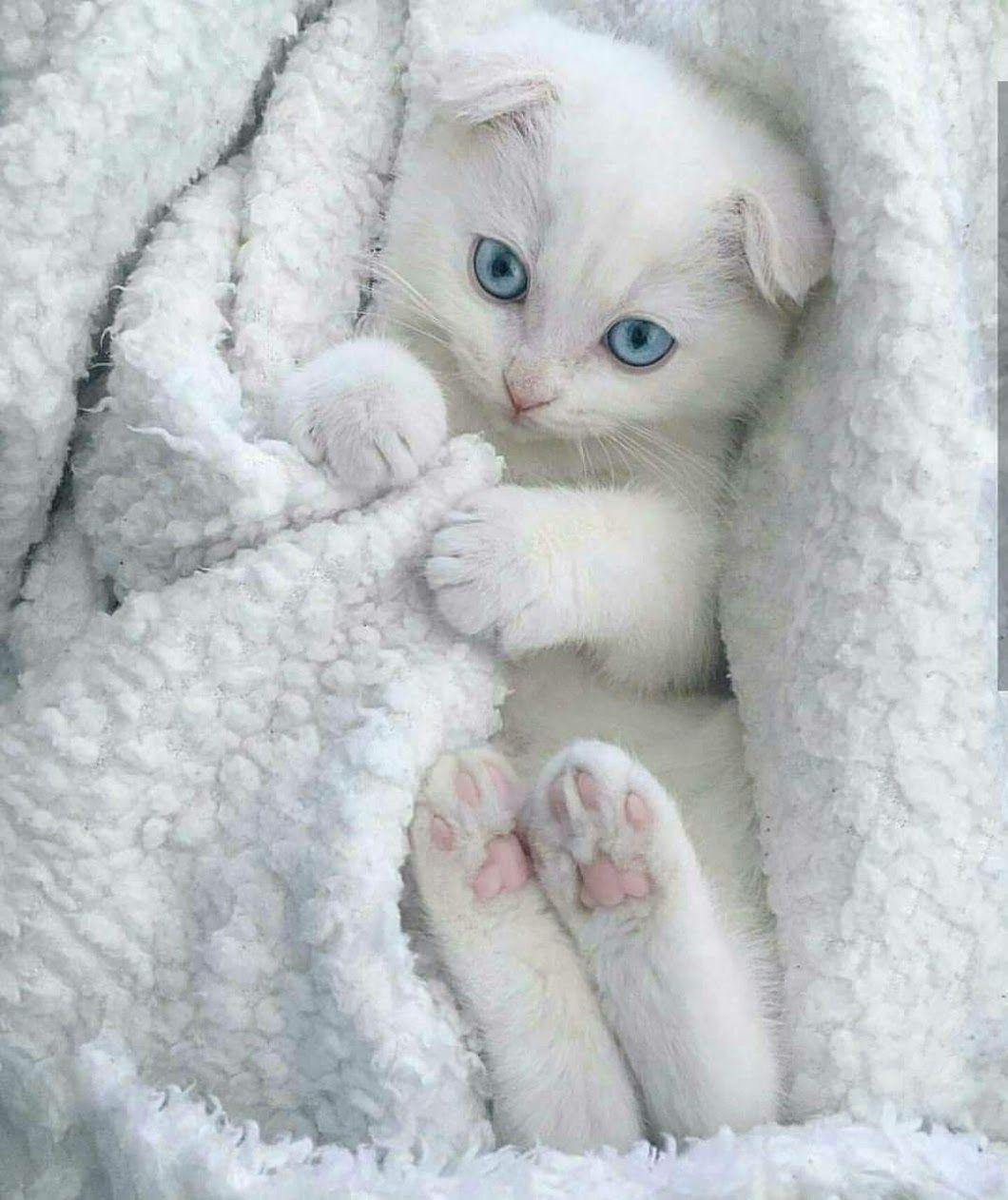 Sign In Cute Kittens Bayi Hewan Bayi Hewan Lucu