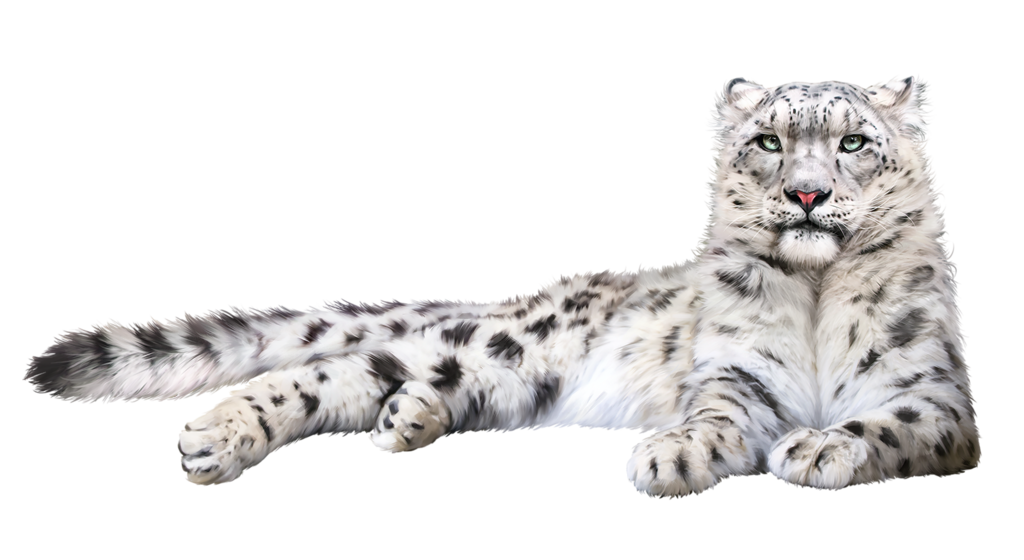 Snow Leopard Png Lion Sculpture Animals Jungle
