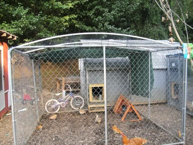 Dog Kennel Wire Roofing And Preditor Proofing Questions