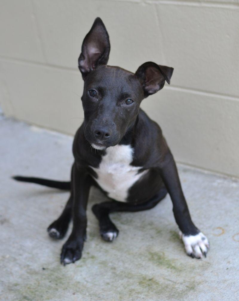Puppies for adoption in gainesville fl