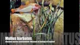 Lysandra Natura - YouTube