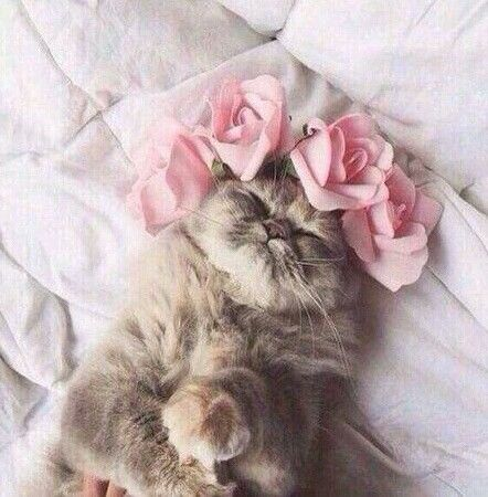 little princess cuteness kitten  cute cats cat pose