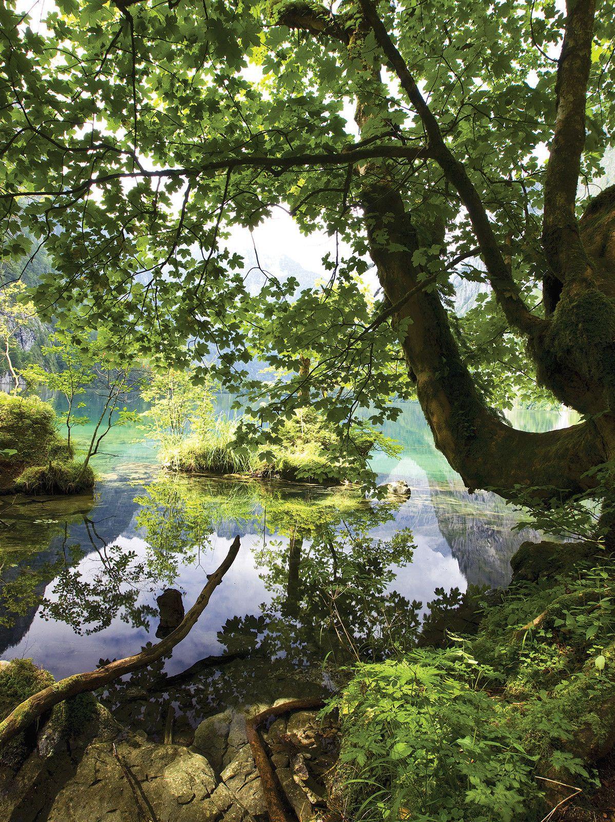 Jugendzimmer Wald | Fototapete Fototapete Tapete Tapeten Poster Pflanzen Natur Wasser