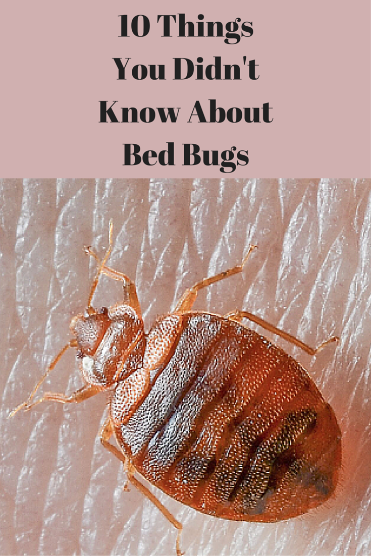 10 things you didn t know about bed bugs bed bugs pinterest