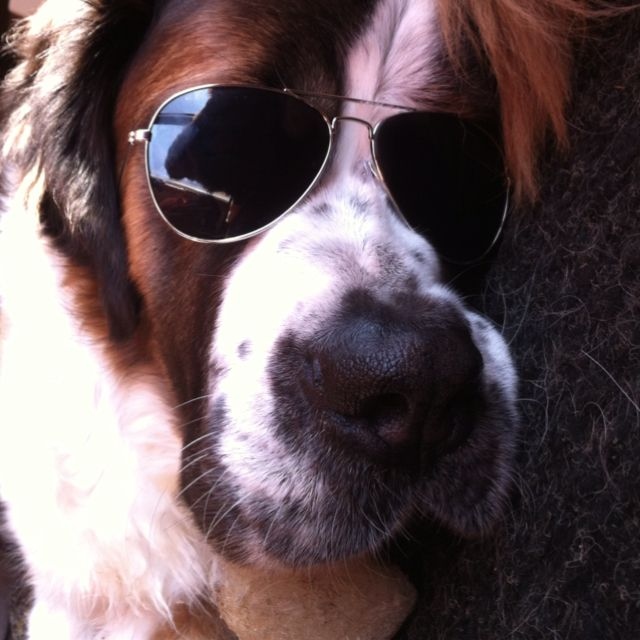 Our dog daisy Mae (With images) Sunglasses women, Pets