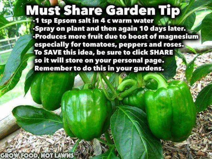 How To Produce More Pepper And Tomatoes Epsom Salt And 640 x 480