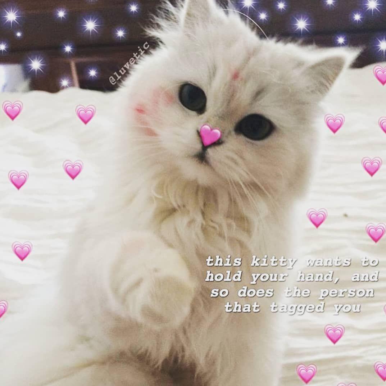 Pin by moonkeeper on Memes Cute memes, Happy memes