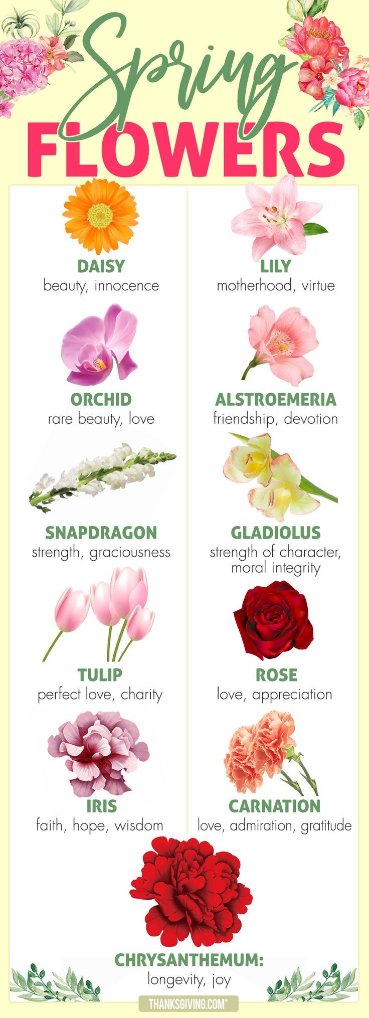Beauty, love, hope & more Spring flower meanings Spring