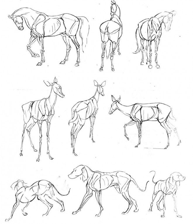 Line Drawings Of Cartoon Animals : Beautiful animal drawings for your inspiration how to