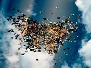 amazing butterflies in the air