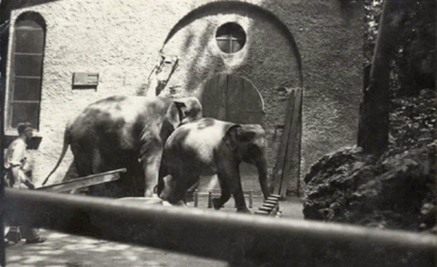 Lo zoo dei Giardini Pubblici di Milano (con immagini