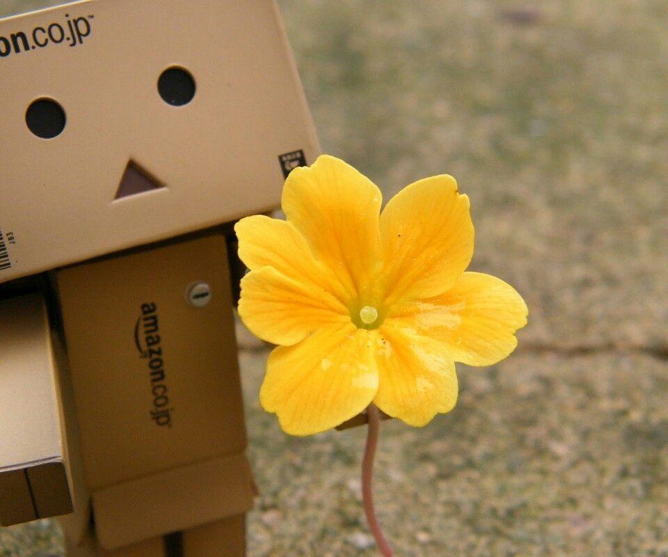 Danbo yellow flower
