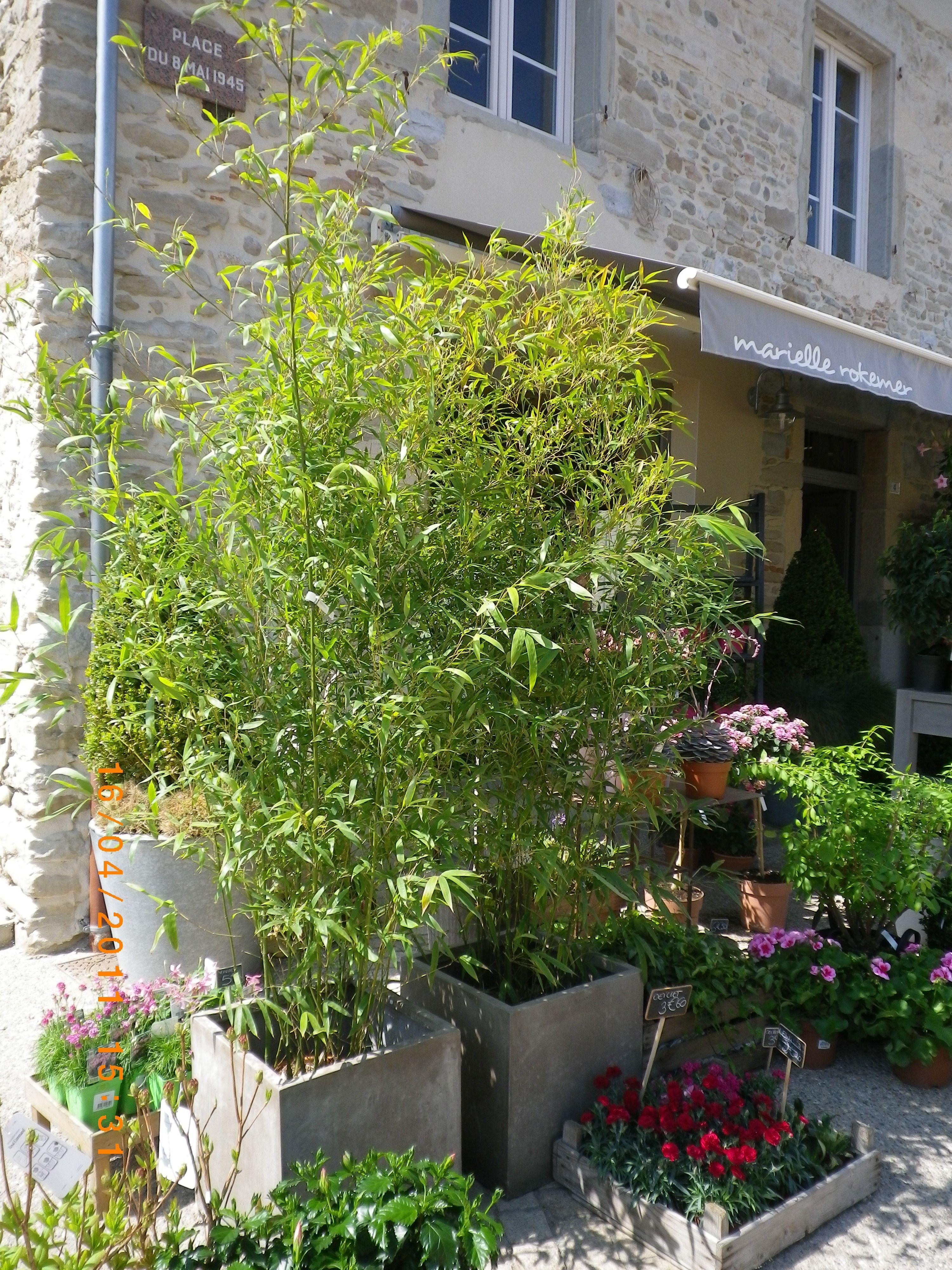 bambous dans bac ciment | balcon | plante exterieur, ciment et bambou