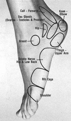 Simple and useful graphic for foot massage / Schema semplice e molto utile per la riflessologia plantare