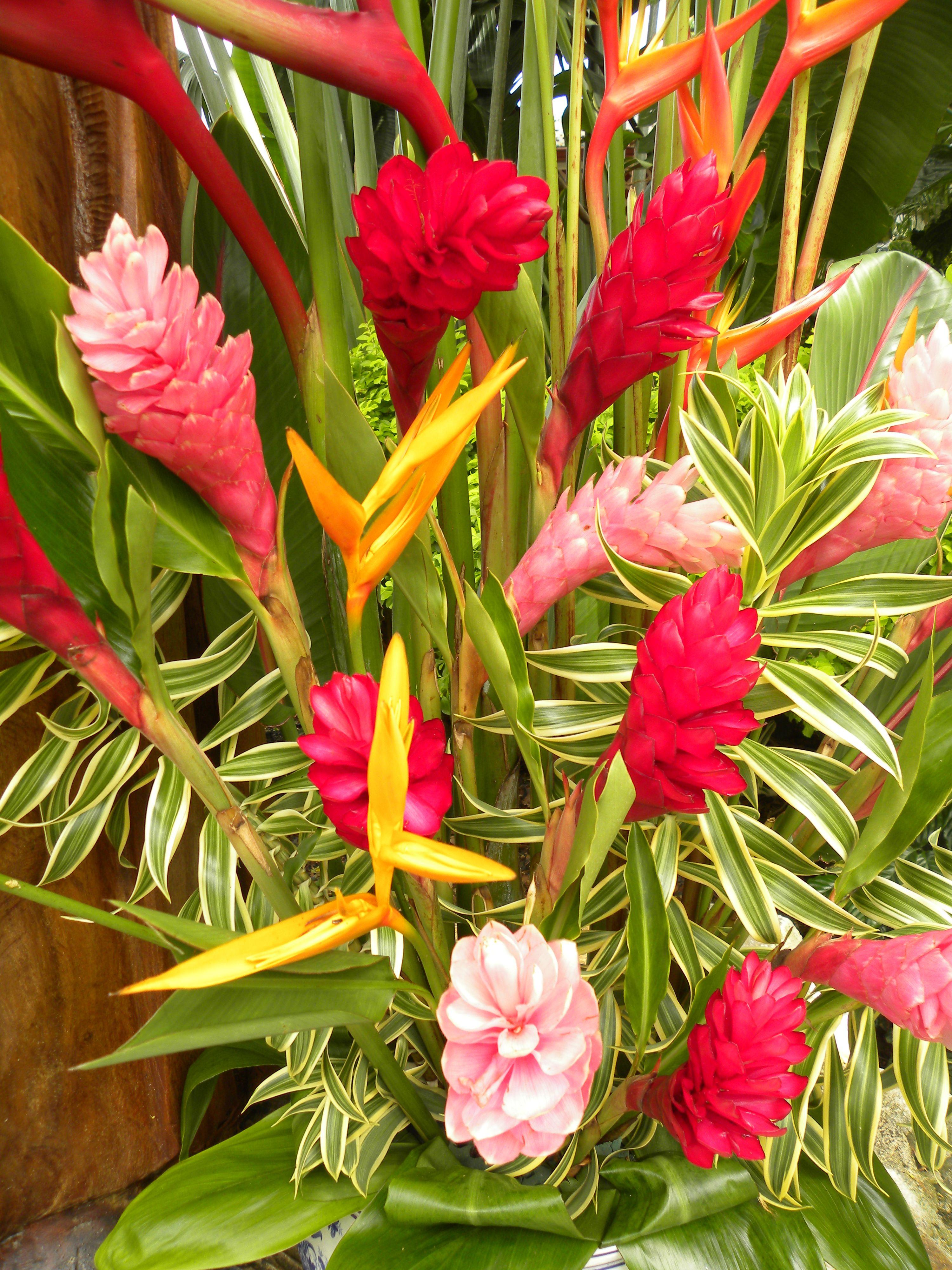 Hawaiian island beauties favorite places spaces pinterest hawaiian island beauties izmirmasajfo
