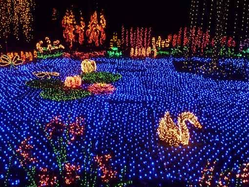 Garden d 39 light festival at bellevue botanical garden a holiday attraction travel i love for Bellevue botanical garden lights