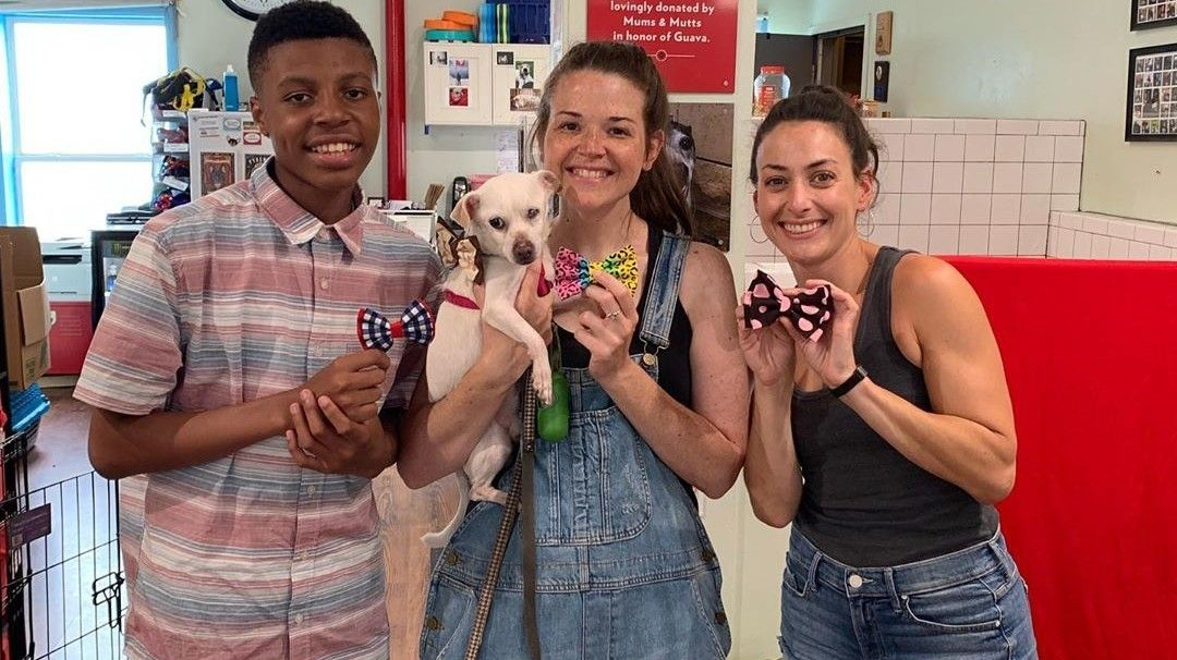 Boy Creates Bow Ties For Shelter Animals To Help Them Get Adopted Animal Shelter Dog Help Shelter Kittens