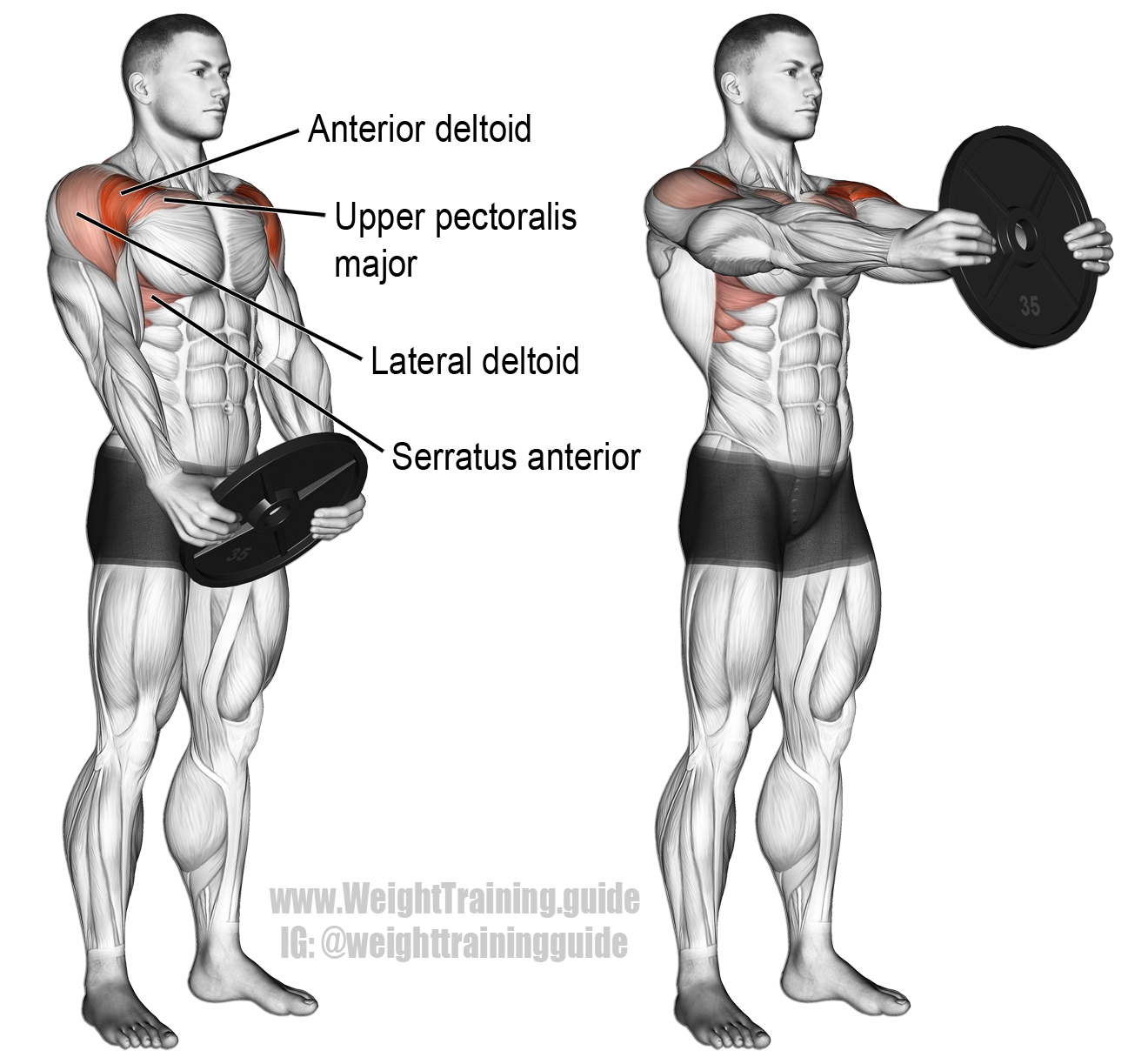 Plate Front Raise Exercise Instructions And Video Shoulder
