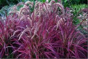 Types of Ornamental Grass - Bing images