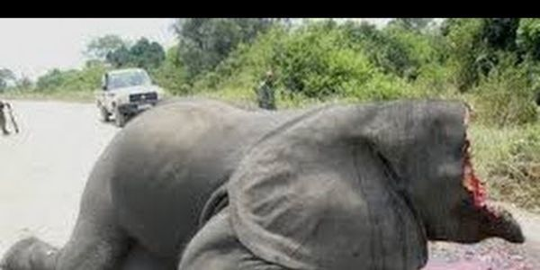 Help stop the bloody business ofpoaching for elephant tusks NEW - business petition